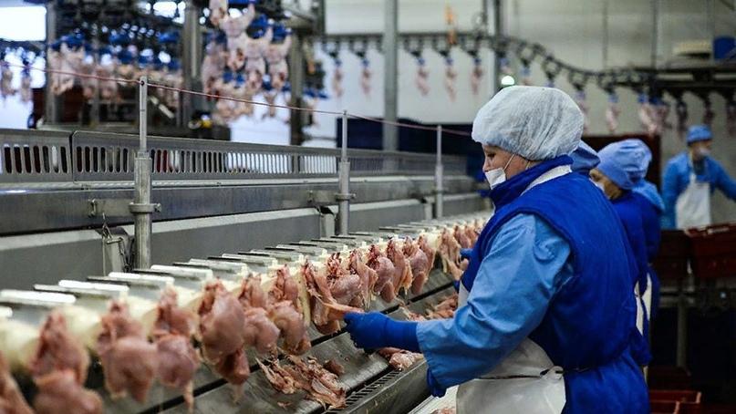 В отрасли сообщили о снижении оптовых цен на курицу