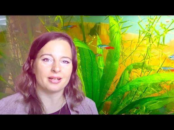 Аквариумный бизнес в изоляции Как продавать аквариумные растения отсылая по почте