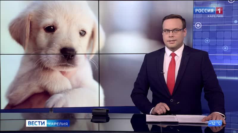 Карельская семья заботится о брошенной в лесу слепой собаке 2021 Заозерье Прионежский район 720p mp4