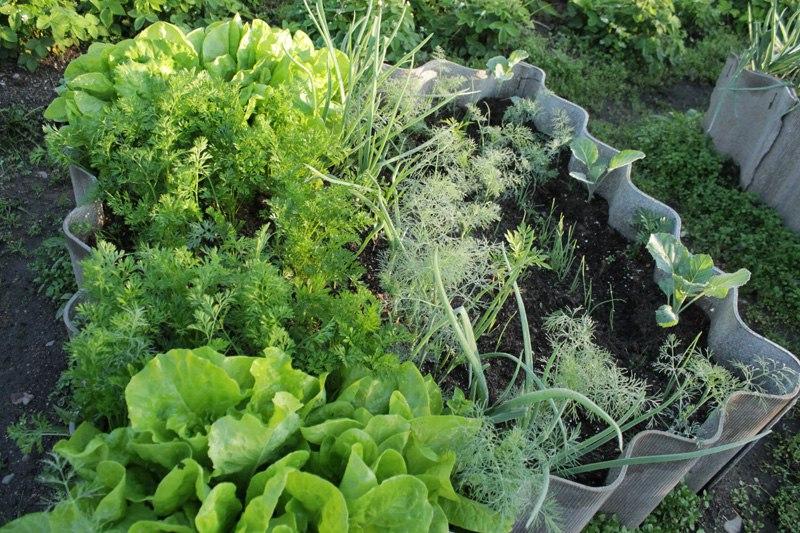 Салат  что нужно знать о салате