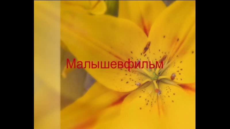Отрывок из Юбилейного концерта Владимира Малышева 2002 г