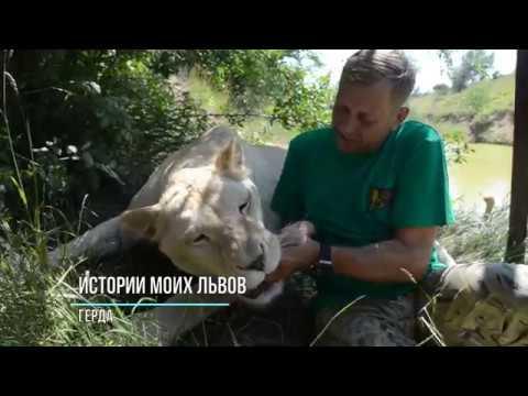 Истории наших львов ГЕРДА ЗВЕЗДА ТАЙГАНА