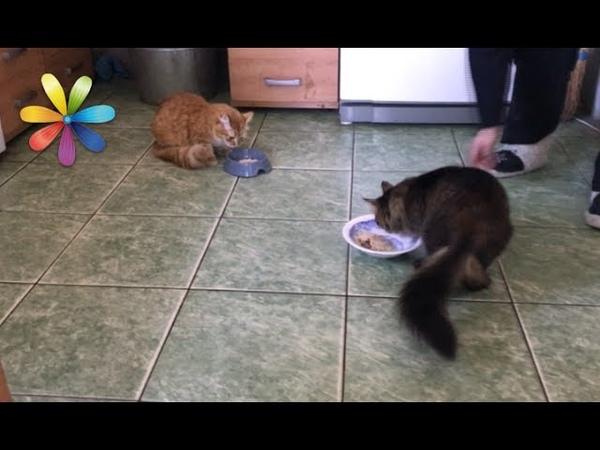 Как примирить двух котов которые раньше не жили вместе Все буде добре Выпуск 1049 от 10 07 17