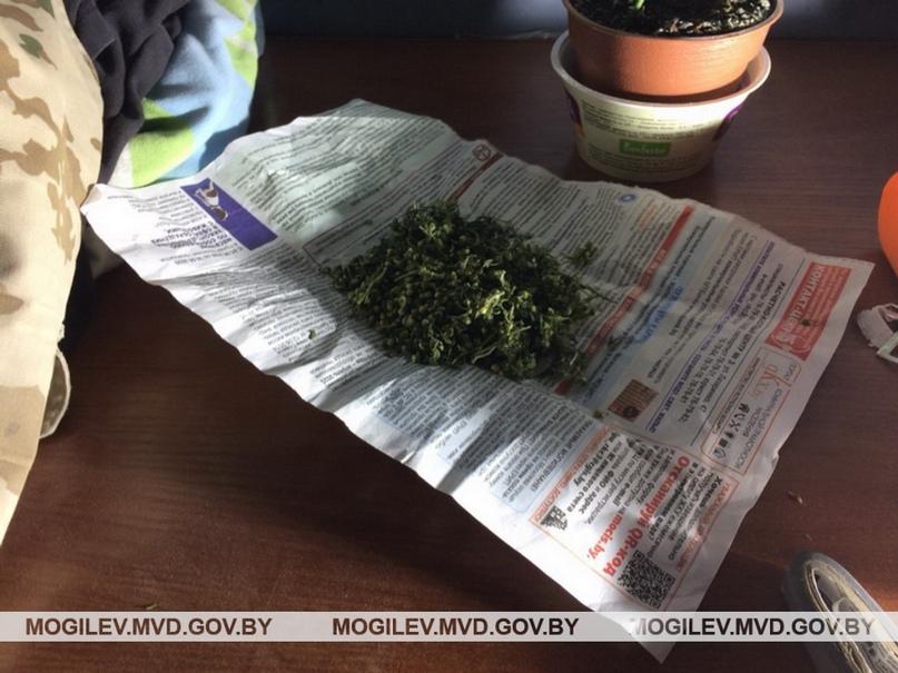 5 граммов конопли ответственность день ночь ясность марихуана