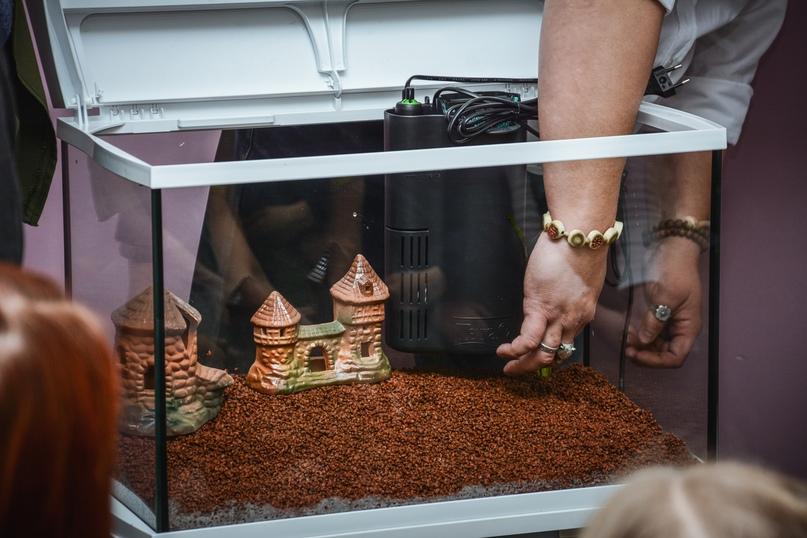 В Православной гимназии 03.12 прошел мастер класс по уходу за аквариумом с живыми растениями и рыбками!, изображение №10
