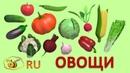 Учим овощи. Первые слова для малыша. Развивающий мультик для детей 1-3 года