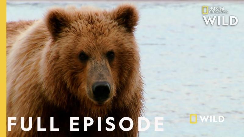 Grizzly Battleground Full Episode Alaska's Grizzly Gauntlet